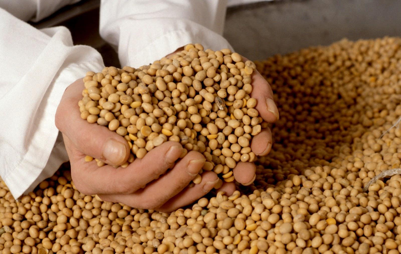 La soya y sus propiedades - Cuisiner des pousses de soja ...