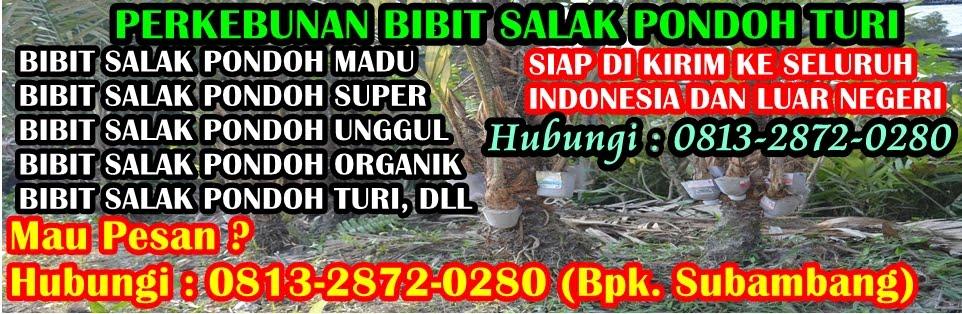 Bibit Salak Pondoh Unggul Madu Super Organik Turi Sleman Yogyakarta