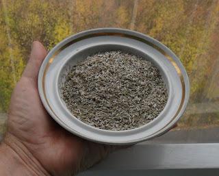 10.10. Заготовленные семена салата подсушиваю на блюдце