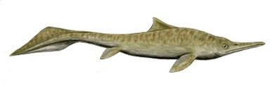 reptiles marinos primitivos Mixosaurus
