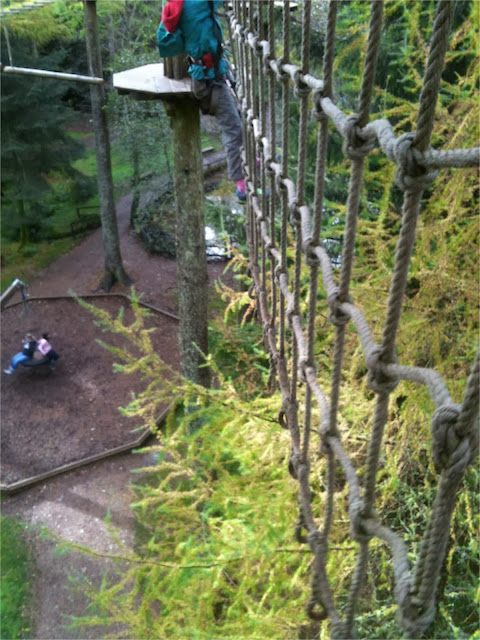 Go Ape Whinlatter don't look down