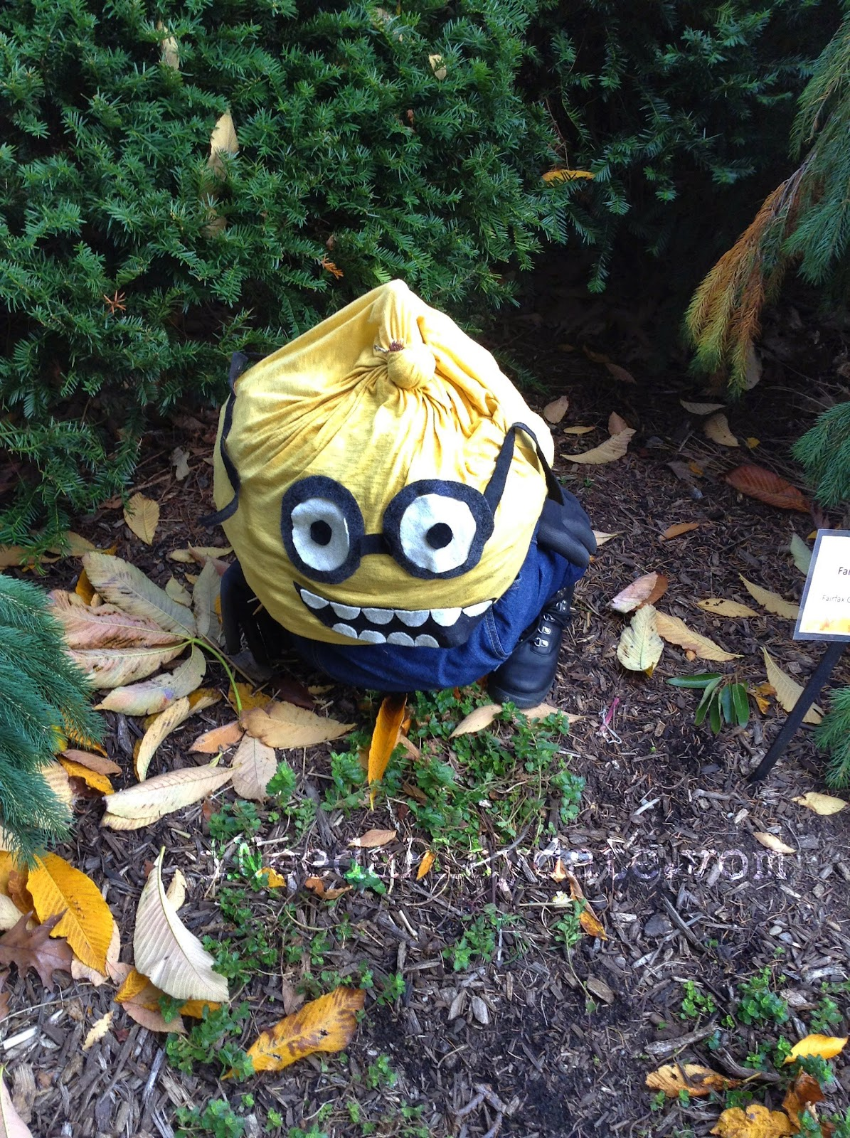 Minion  | ColorFall at CLE Botanical Garden
