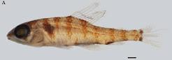 Última especie descrita para Venezuela
