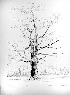 pen and ink drawings, giant tree, oak, double oak, forest, niagara river