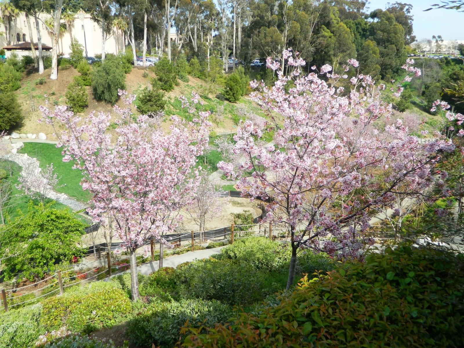 Gardenenvy japanese friendship garden in san diego is for Japanese friendship garden