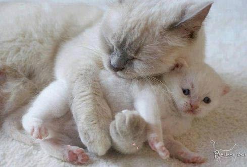 Mum & sons
