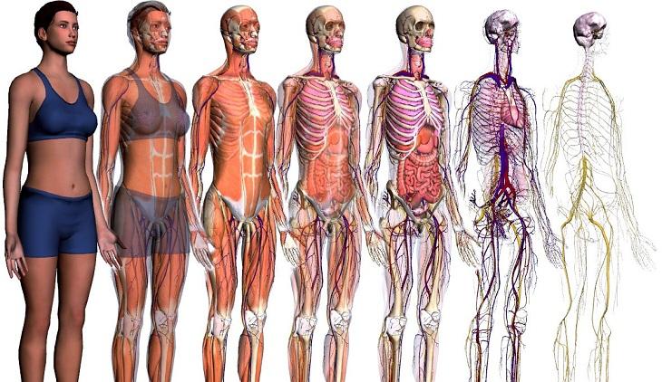Anatomía y Biología : octubre 2015