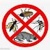 Mare atenţie: Începe deratizarea în Constanţa şi Mamaia. Pericol mare pentru ţânţari, şobolani, etc