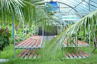hydrophonics of Garin farm