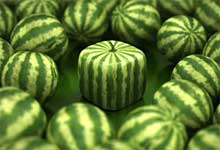 square watermelon