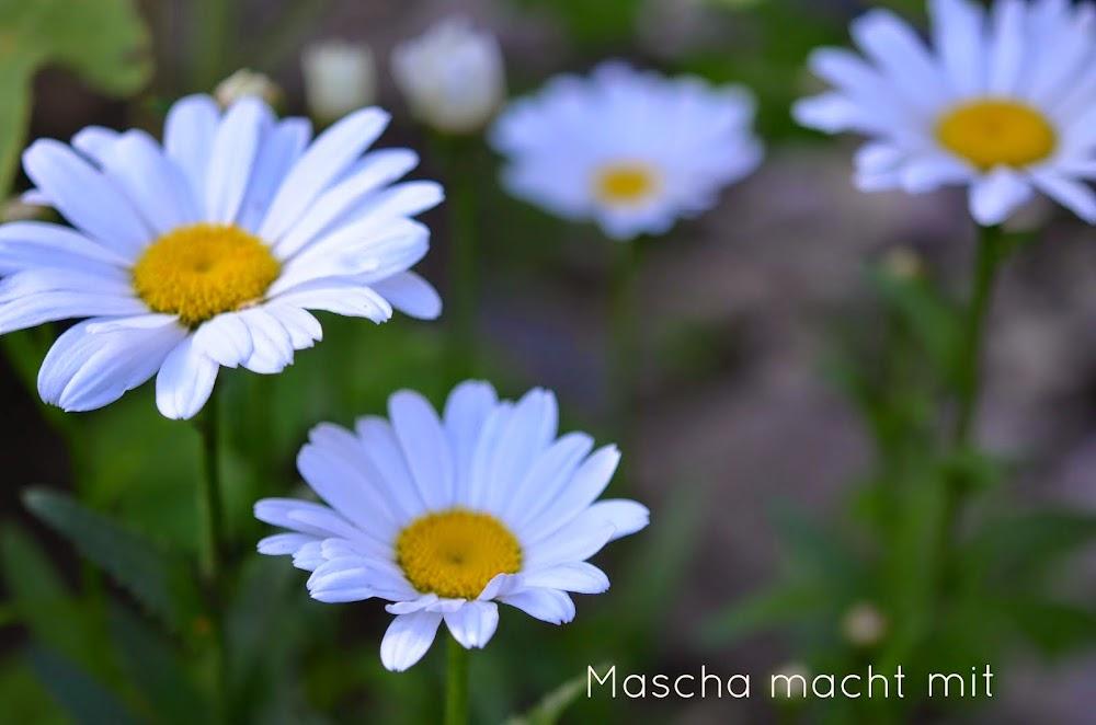 mascha-macht-mit