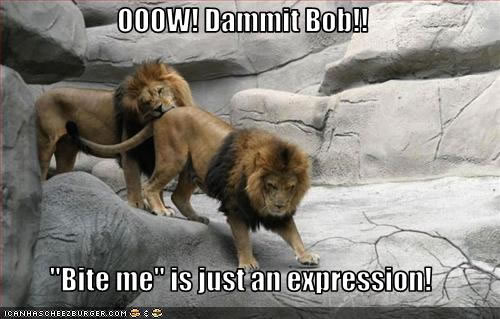 Pictures of Cute Animals doing Funny Things!