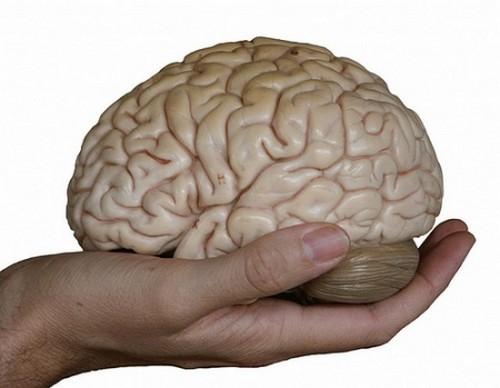 Y sobre todo... cerebro