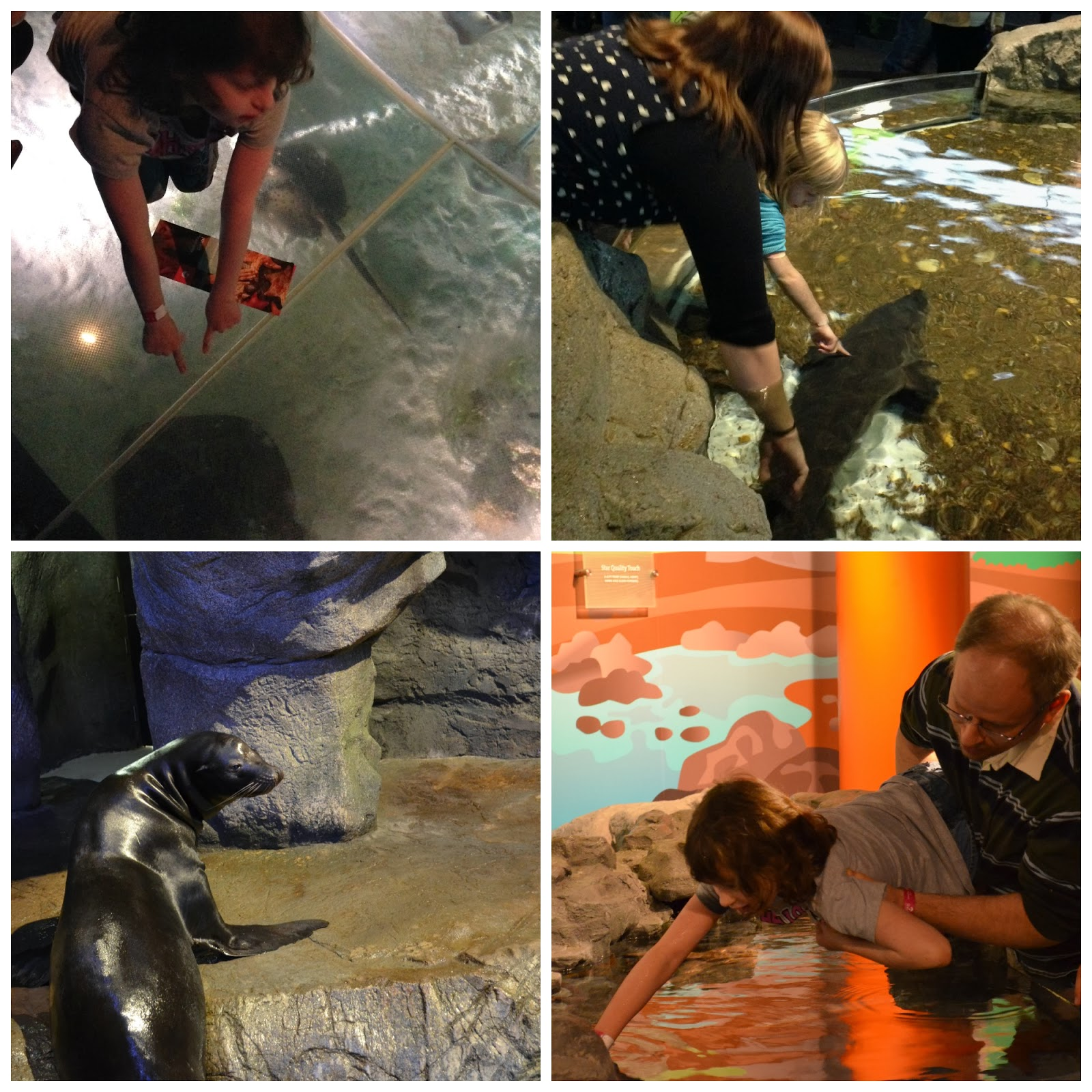 Hands-On Exhibits at Shedd Aquarium in Chicago