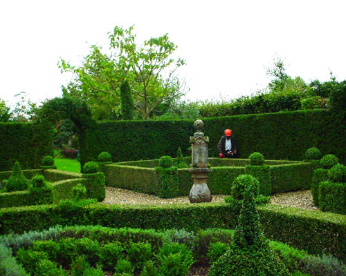 Arte y jardiner a arte topiario jardiner a ornamental for Tipos de pinos para jardin