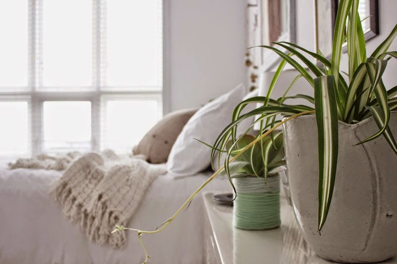 plants in bedroom for cleaner air