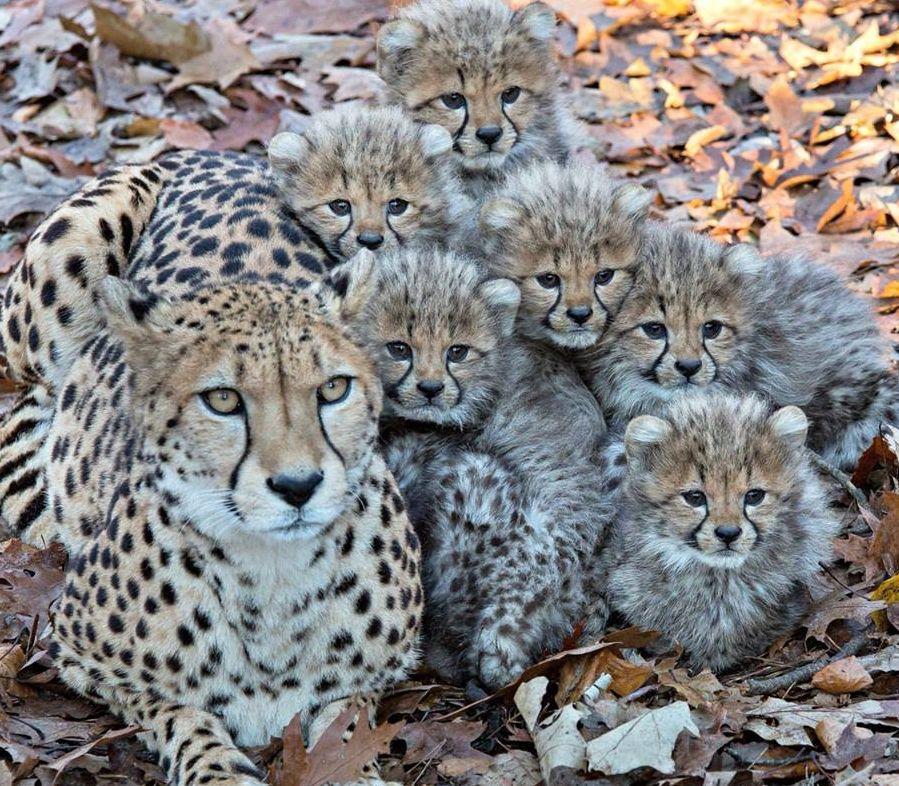 Piękna rodzinka :)