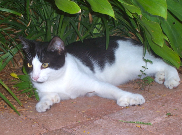 Hemingway Cats Federalized Phillip S Natural World 1 0 2