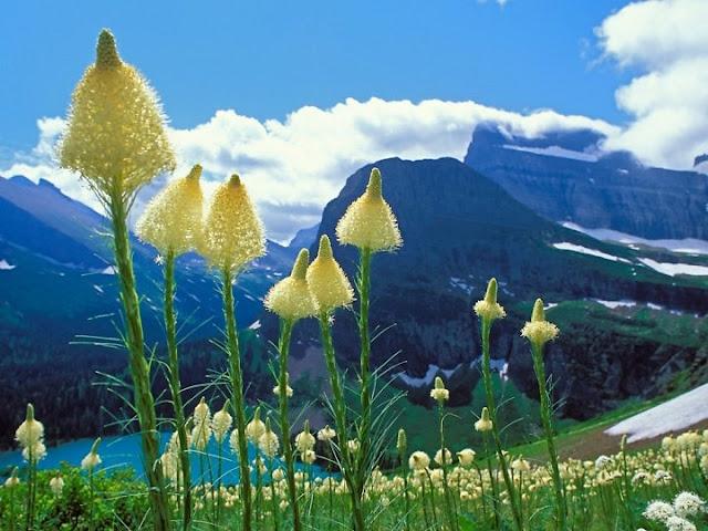 Hình nền đẹp nhất - hinh nen dep nhat - hình nền thiên nhiên đẹp nhất