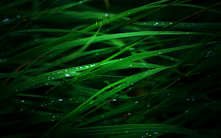 Rain Drops Grass Photo HD Wallpaper