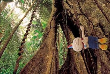 imagenes de animales de la selva amazonica - La selva Amazónica (La Amazonia) El río Amazonas