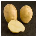 nicola new potatoes