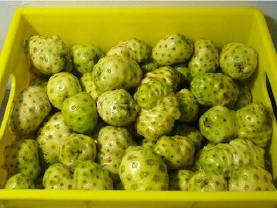 林媽媽酵素製作---諾麗果等十三種天然新鮮蔬果 - 林 ...