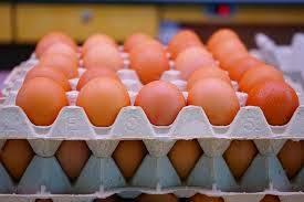 Peluang Bisnis Ternak Ayam Petelur untungnya besar