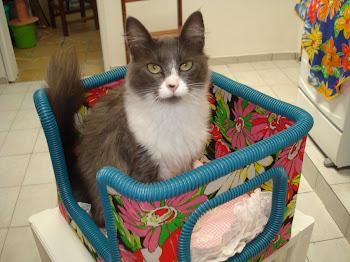 Caminha q mami fez, mas eu gosto de mimi na cama da minha mami...miau.