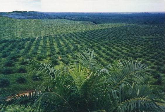 Perkebunan Perbedaan Pertanian Dan Perkebunan