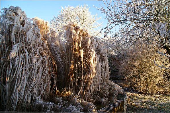 I am light piet oudolf 39 s winter landscapes for Landscapes in landscapes piet oudolf