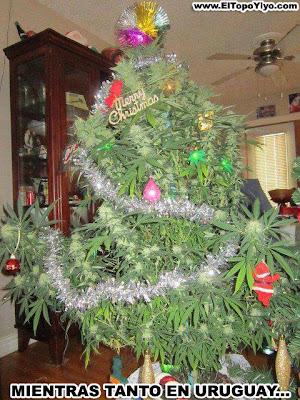 marihuana uruguay humor 2013