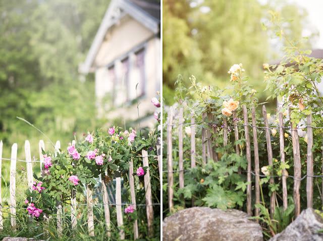 Staket staket rosor : Goda Grannar - Blommig Fredag!