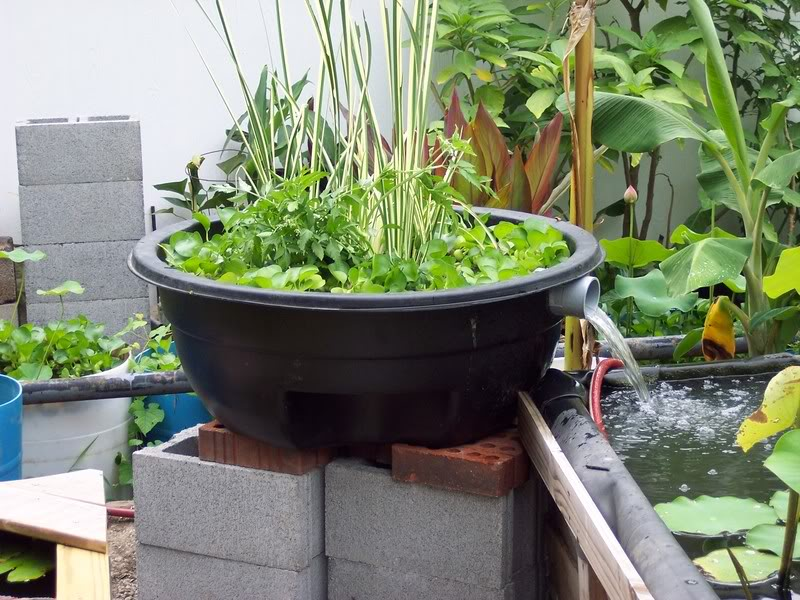 Biological pond filter diy biological free engine image for Water filtering plants for ponds