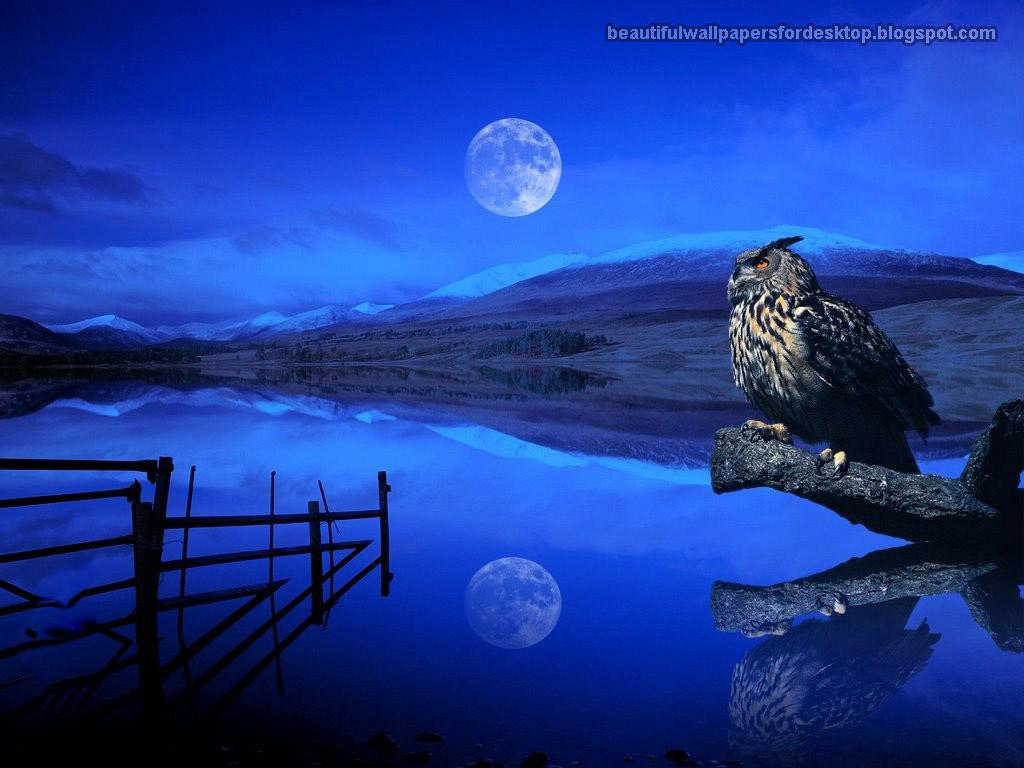 Giraffe M Labels: Night OF Sky W...