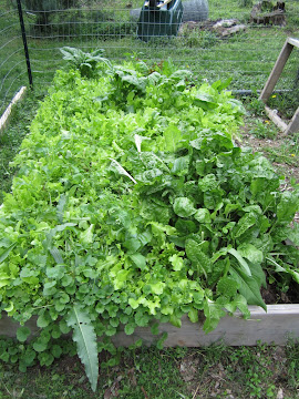 Bed of Greens