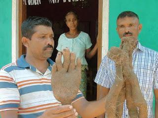 Unusual yam discovered at Mahiyanganaya