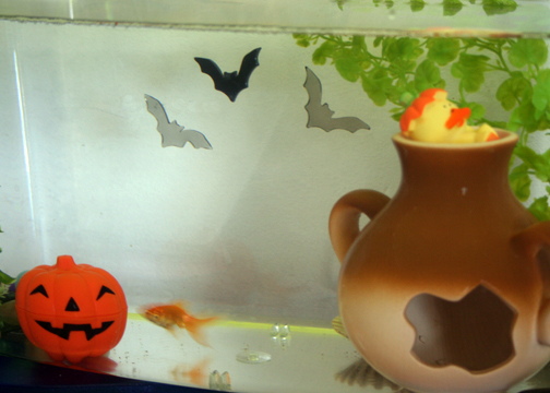 hereu0027s the home of my sweet fish add window clings to the back of your fish tank to add a spooky accent for halloween