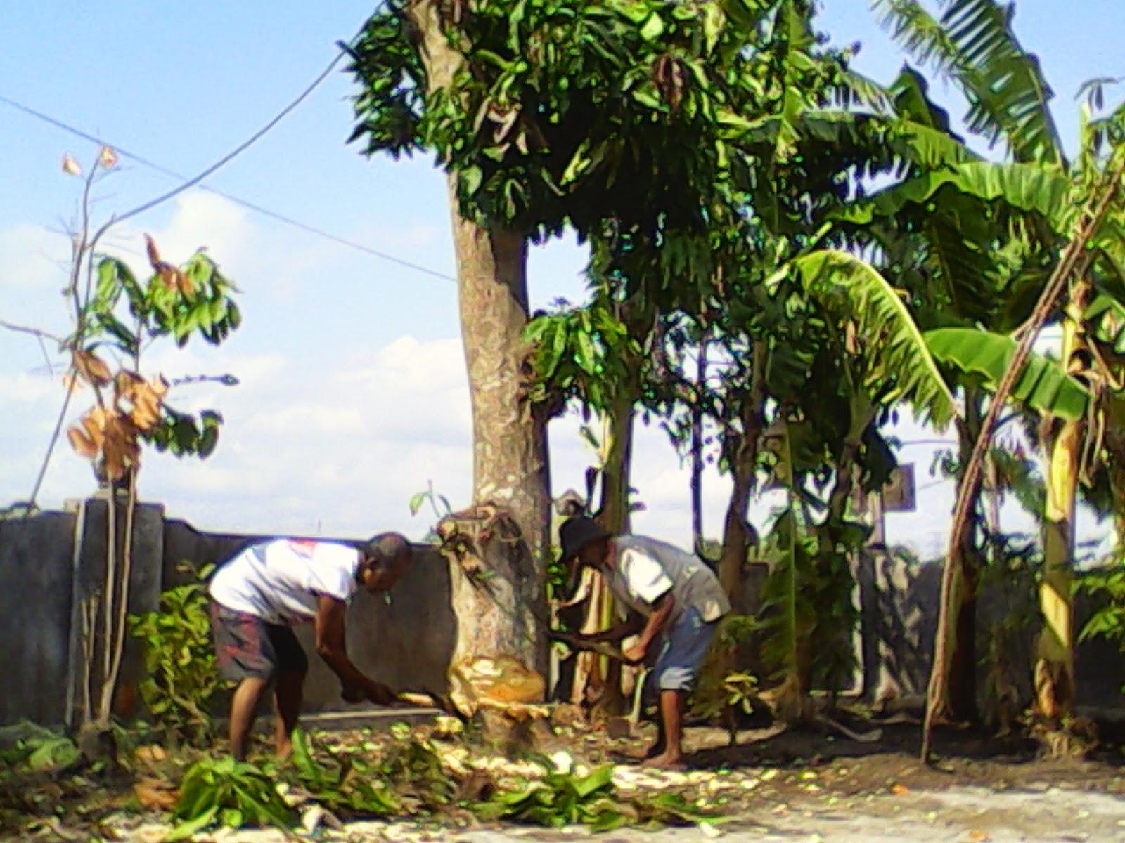 Cara Menebang Pohon