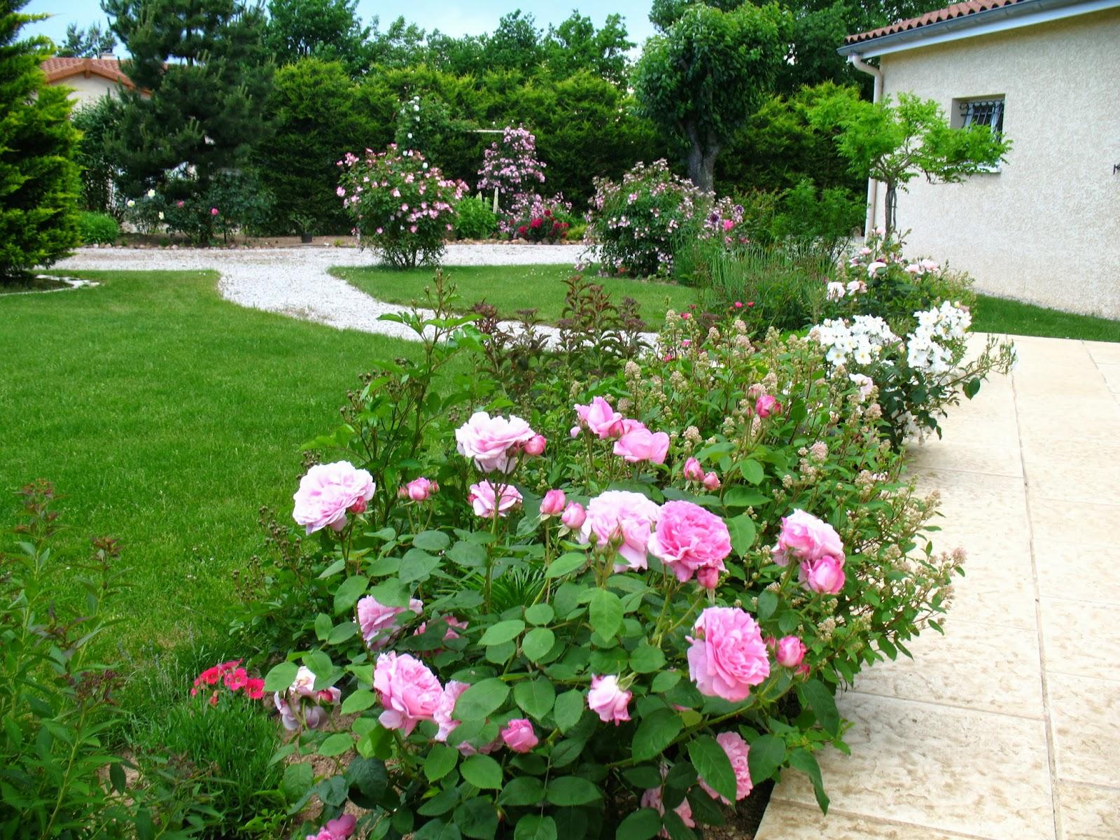 Roses du jardin ch neland rush la rose du jour - A quel moment tailler les rosiers ...