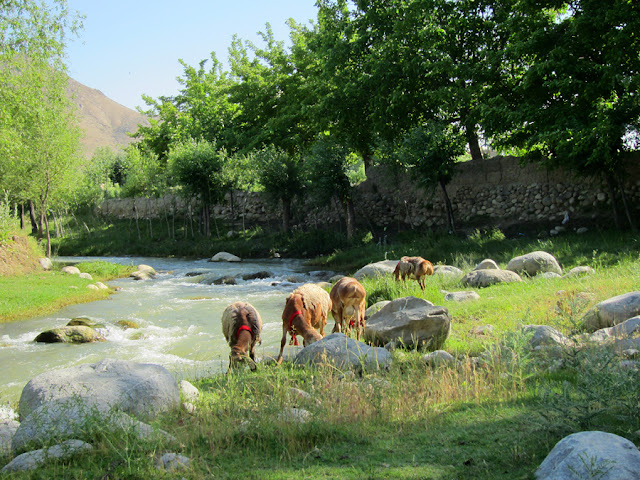 Gul Dara District, Afghanistan