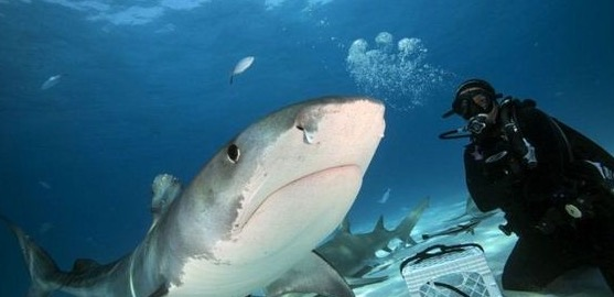 Rupa Mulut Ikan Jerung yang Anda Tak Pernah Lihat