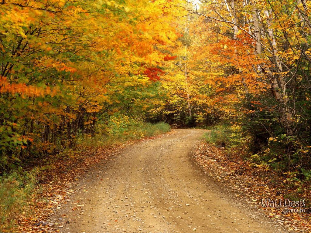Road Autumn Wallpapers,HD
