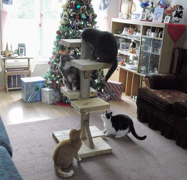 four cats and a cat tree