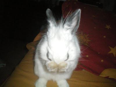 conejo-blanco-turron