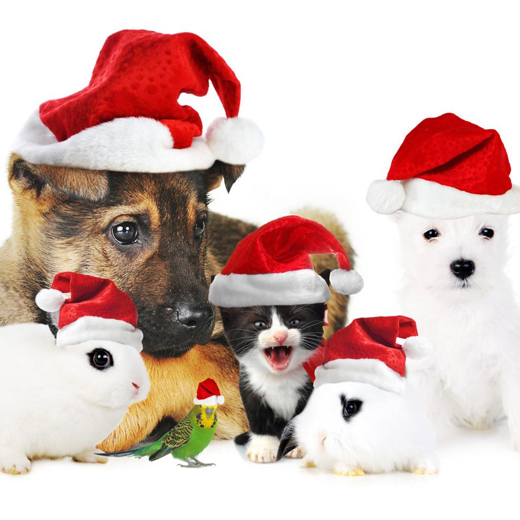 Ipad Wallpapers Free Download Christmas Pets Ipad Wallpapers