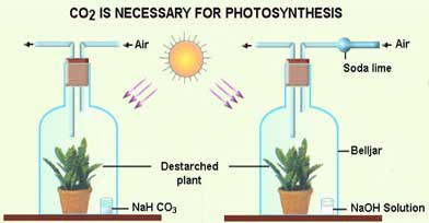 hypothesis of photosynthesis using sodium bicarbonate When sodium bicarbonate is added to water, the bicarbonate will cause the disks to sink as photosynthesis continues, oxygen is released into the leaf disks, changing the ability of the leaf disks to float in water, and causing them to rise.
