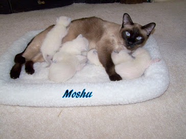 Moshu, daughter to Mayling and Simion .