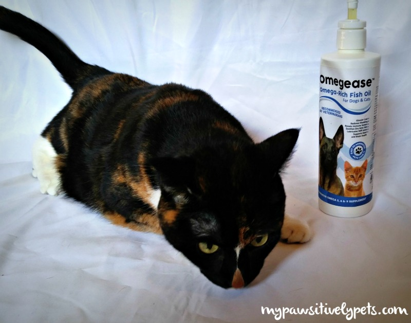 Boosting Your Pet 39 S Diet With Omegease Fish Oil