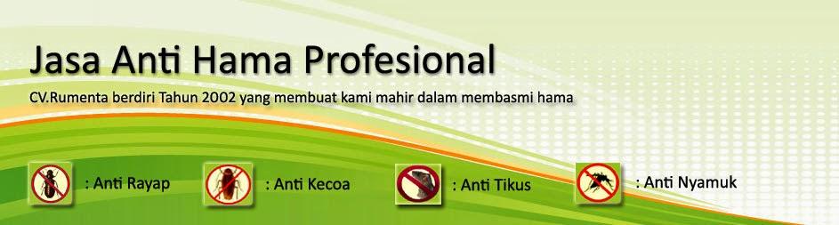 Solusi Anti rayap dengan obat anti rayap terbaik dan Ramah Lingkungan